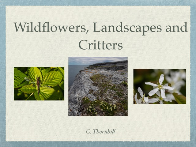 Clyde Thornhill Wildflowers Landscapes and Critters